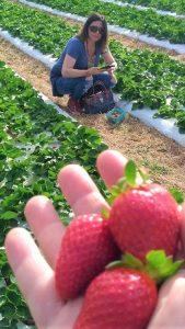 Knaus Berry Farm @Estilos_RECO